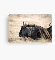 Pilanesburg Wildlife Canvas Print