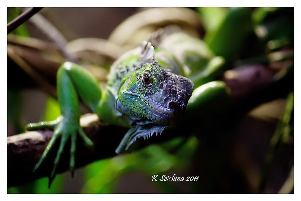 Looking iguana by bluetaipan