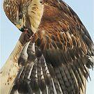 Ferrugenous Hawk by Linda Sparks