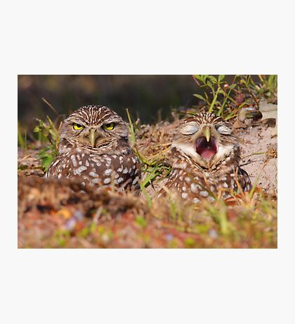 We Hate Mornings - Burrowing Owls Photographic Print