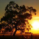 Golden Sunset by Dave Callaway