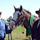 Reserve Champion Clydesdale Gelding, 2012 Royal Canberra Show by Kate Howarth