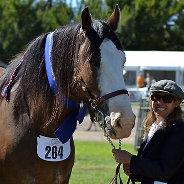 Clydesdale, 2012 Royal Canberra Show by weejasper