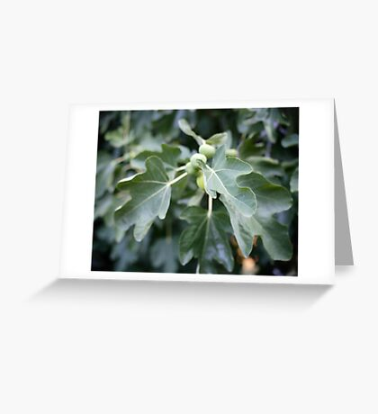 fig tree Greeting Card