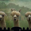 The Alpaca Farm by swaby