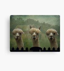 The Alpaca Farm Canvas Print