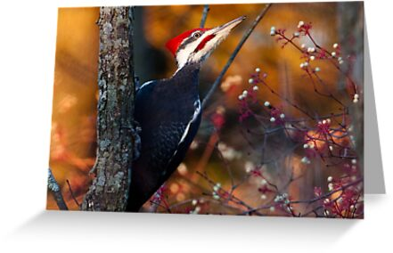 Pileated Woodpecker by michelsoucy