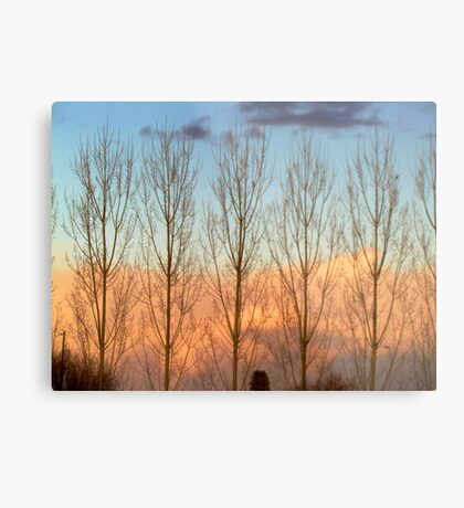 Sunset Colors- Country Roads- 2-18-2012 Metal Print