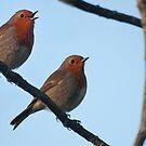 Take two Robin's by LorrieBee