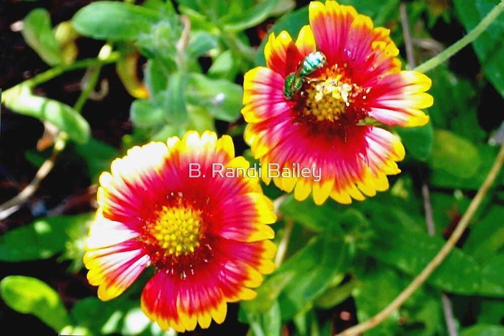 Green bee on sunny blanket flowers by ♥⊱ B. Randi Bailey