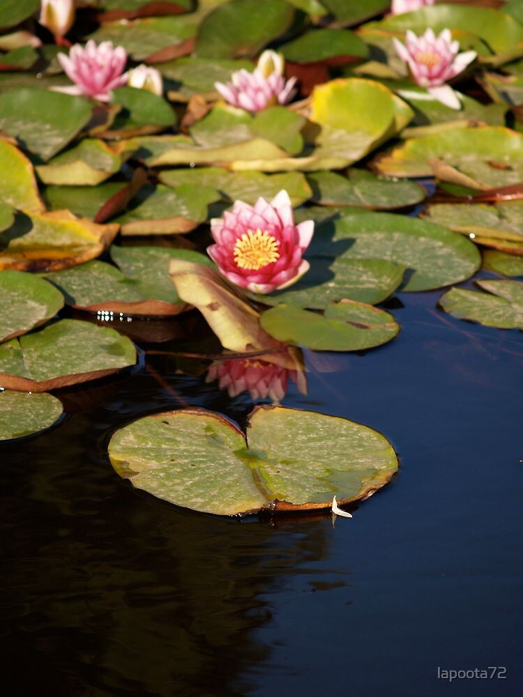 Water Lily by lapoota72