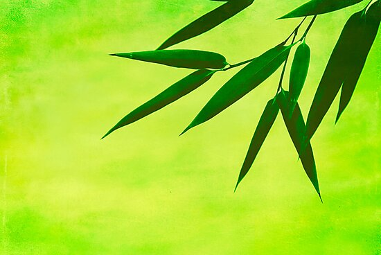 bamboo leaves #2 by hannes cmarits