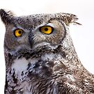 Great Horned Owl by Sue  Cullumber