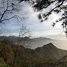 Sequoia View by Patty Boyte