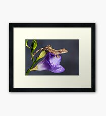 Crested gecko baby on purple freesia Framed Print