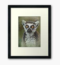 Portrait of a Lemur  Framed Print