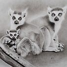 Family of Lemurs by Peter Lawton