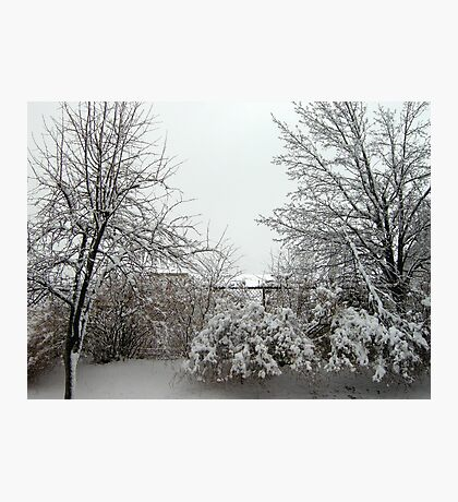 March Comes in Like a Lion  Photographic Print