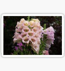 Exquisite, Elegant English Foxgloves Sticker