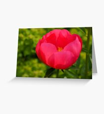 Vivid Spring - Impossibly Pink Peony Unfolding Greeting Card