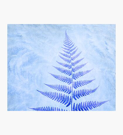 Frosted Fern Photographic Print