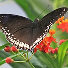 Have a Great Butterfly Day! by Rose Landry