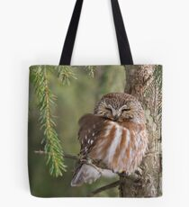 Leap Day Northern Saw-whet Owl. Tote Bag
