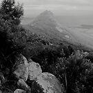 Mt Strszelecki 1 by Andrew  Makowiecki
