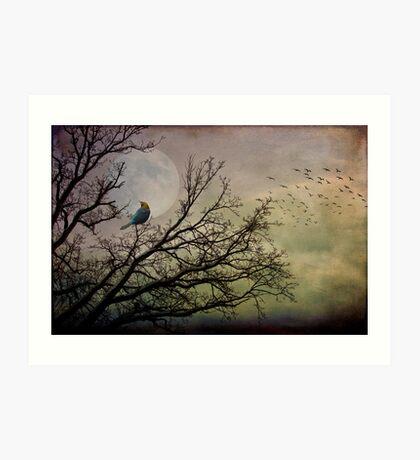 I want to be free ( Davy Jones Tribute) Kunstdruck