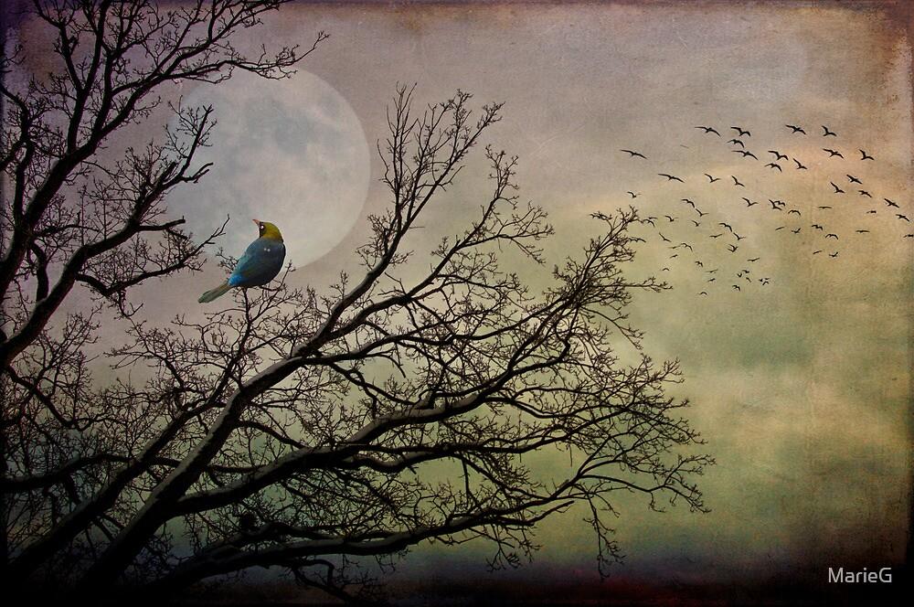 I want to be free ( Davy Jones Tribute) von MarieG