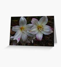 Bella Donna Lilies Greeting Card