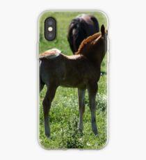 Chestnut Colt iPhone Case
