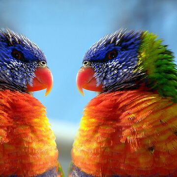 rainbow lorikeet by Bot2