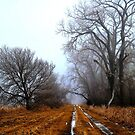 Off the Beaten Path ! by Jan Siemucha