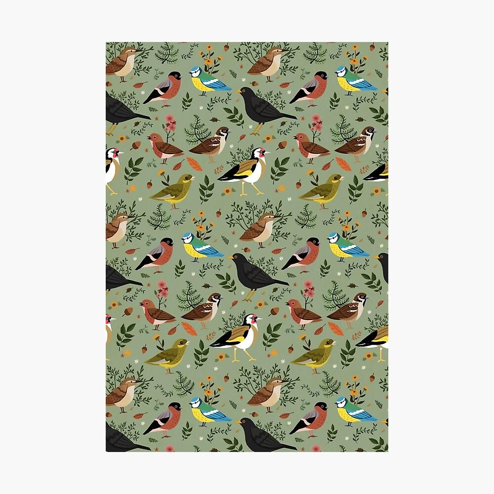 Garden Birds Photographic Print