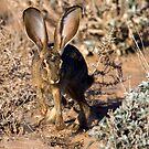 Bunny Hop by Sue  Cullumber