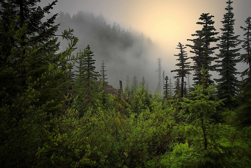 Here Comes The Sun by Charles & Patricia   Harkins ~ Picture Oregon