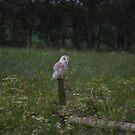 Only Owls by Carla Maloco