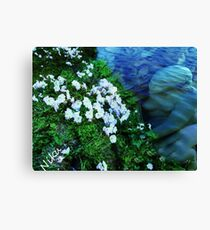 Sea Angel Canvas Print