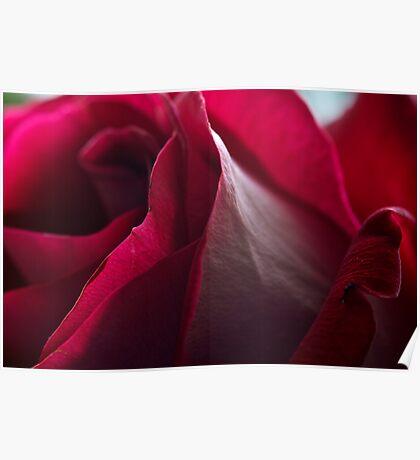 Rose Skin Poster