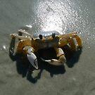 Crab by Sheila Simpson