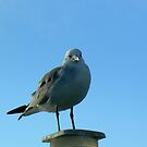 Seagull Perched by Sheila Simpson