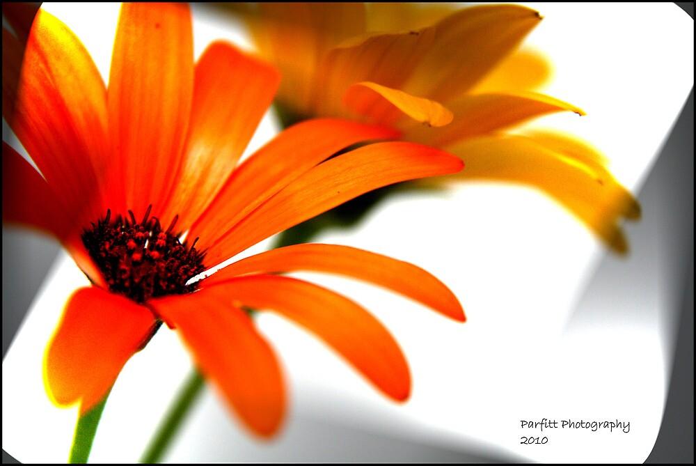 Colored daisy! by Greg Parfitt