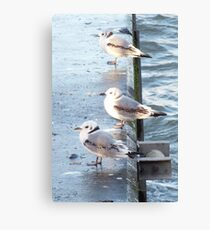 In Line on the Harbour Wall Canvas Print