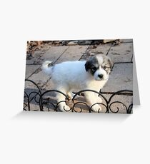 Oh, Hello I Am Jewell What Is Your Name?  Greeting Card