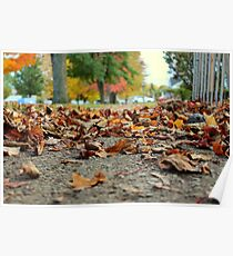 Fallen Autumn Leaves Poster