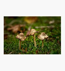 Miniature fungi Photographic Print