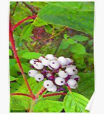 Gooseberries Poster