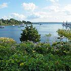 Woods Hole Cape Cod Massachucetts USA by AnnDixon
