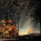 When the light is playing in the forest by jchanders
